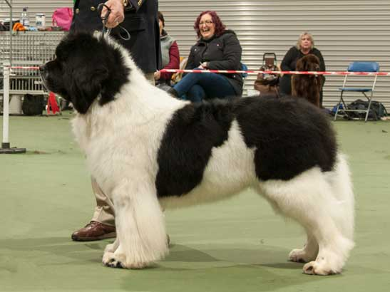 Winner of Special Open White & Black Dog