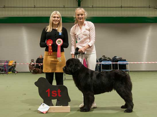 Winner of Junior Handler 12-16