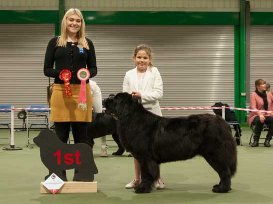 Winner of Junior Handler 6-11