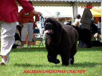 Kalibah Christmas Cracker