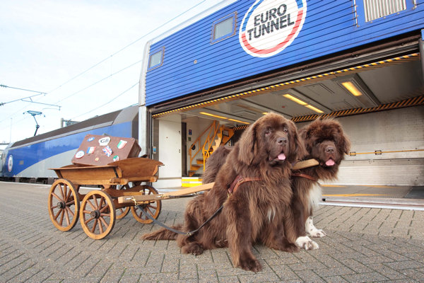 Newfoundland dogs with cart about to board Eurotunnel train
