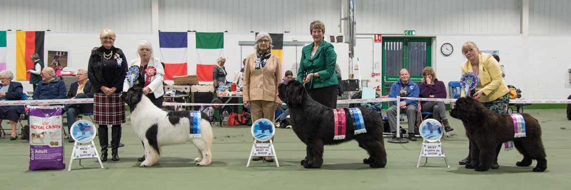 Best In Show winners